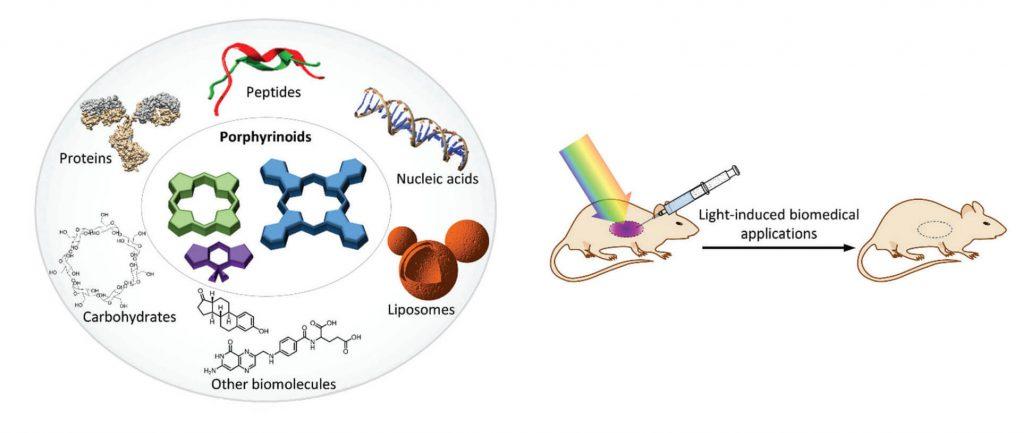 Escosura group porphyrinoid biohybrid materials