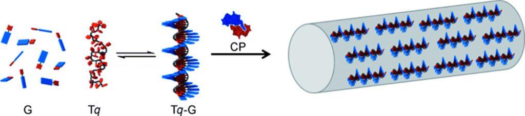protein cage biohybrid materials_ andres escosura